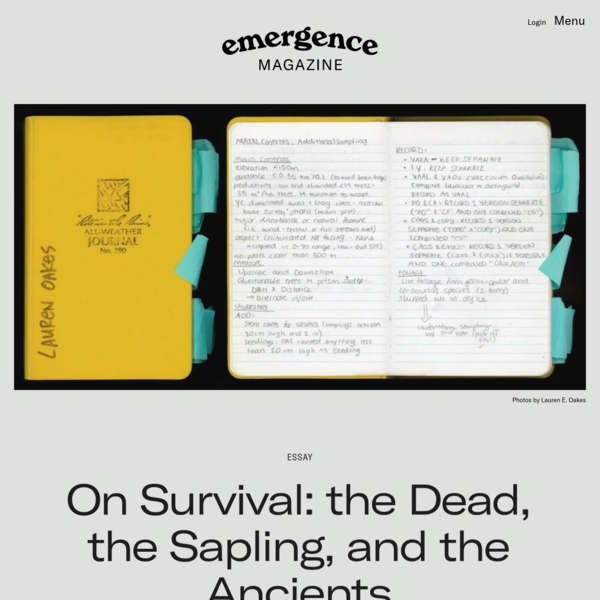 On Survival: the Dead, the Sapling, and the Ancients - Emergence Magazine