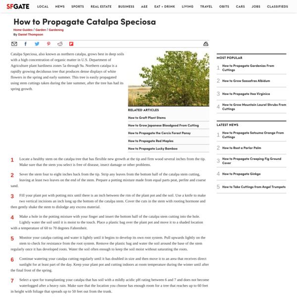 How to Propagate Catalpa Speciosa