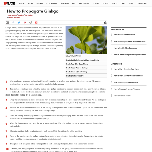 How to Propagate Ginkgo