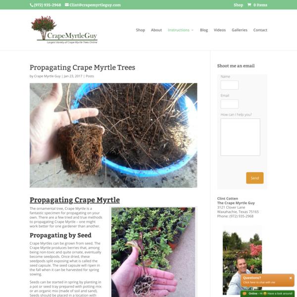 Propagating Crape Myrtle Trees - Crape Myrtle Guy
