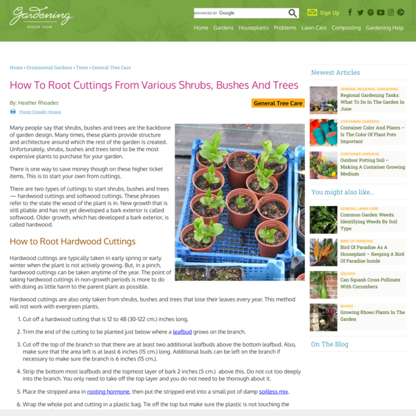 How To Root Cuttings From Various Shrubs, Bushes And Trees