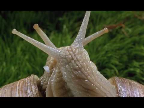 microcosmos - Snails of beauty High Quality