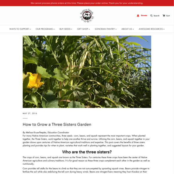 How to Grow a Three Sisters Garden