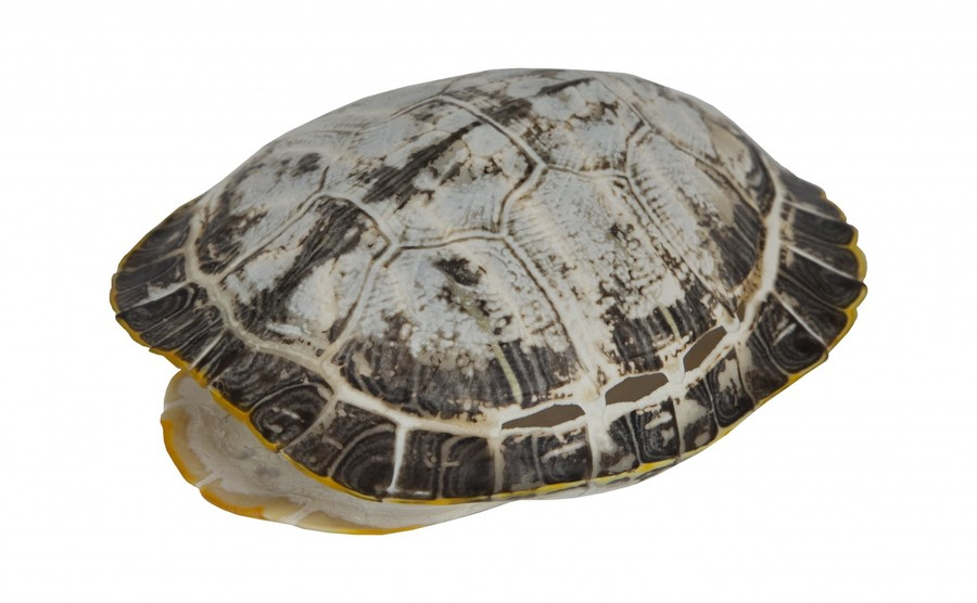 turtle shell pattern - 900×556