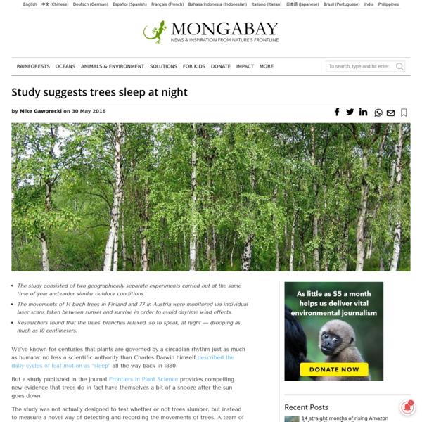 Study suggests trees sleep at night