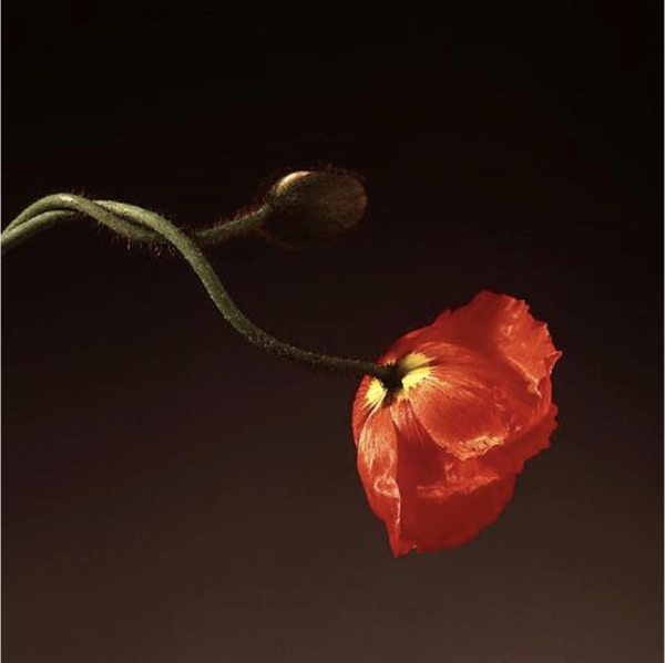 the-robert-mapplethorpe-foundation-flowers_922.png