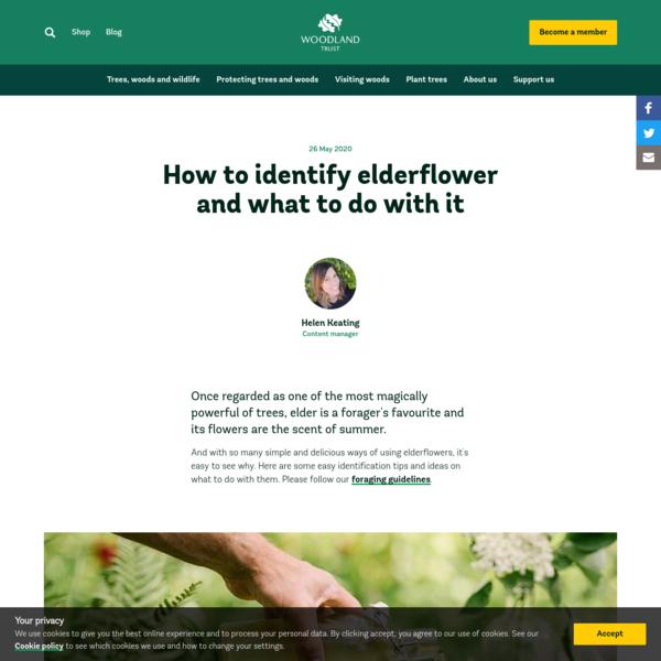 How to Identify and Use Elderflower - Woodland Trust