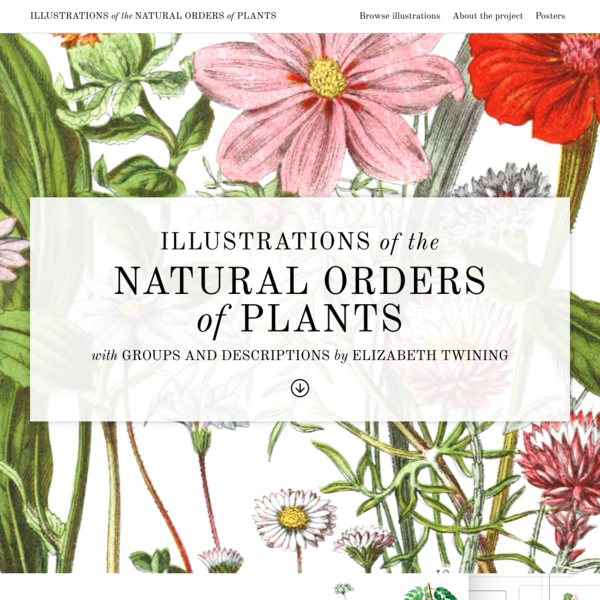 Illustrations of the Natural Orders of Plants