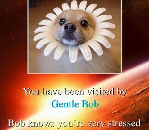gentle_bob.jpg