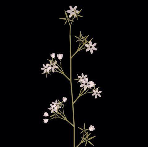 More generative flowers (javascript)