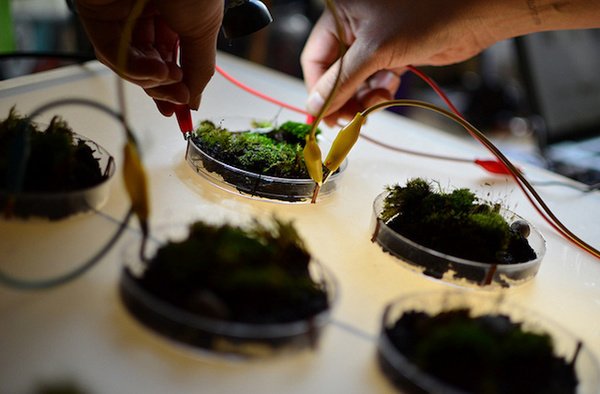 What would plants sound like if you could hear them? That's what artist Leslie Garcia set out to discover when she created Pulsu (m) Plantae , a project that uses transducers and amplifiers to allow us to listen to plants. If you think that plants can't communicate, you're about to be proven wrong.
