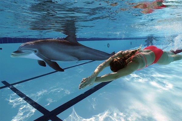 robotic-dolphins-edge-oceanarium-designboom-02.jpg