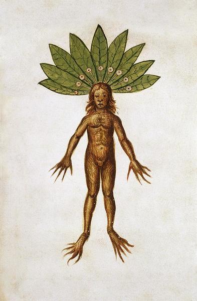 mandrake-root-mancragora-officinarum-natural-history-museum-londonscience-photo-library.jpg