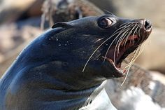 triggered seal