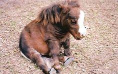 mourning horsie