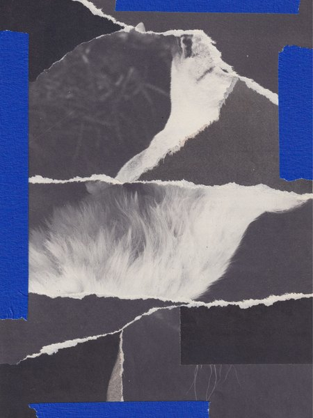 collage_130620_2.jpg