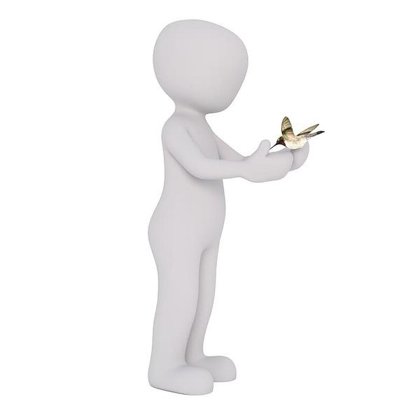 person-holding-hummingbird-illustration.jpg