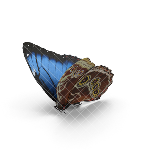 blue-20morpho-20butterfly.g03.watermarked.2k.png