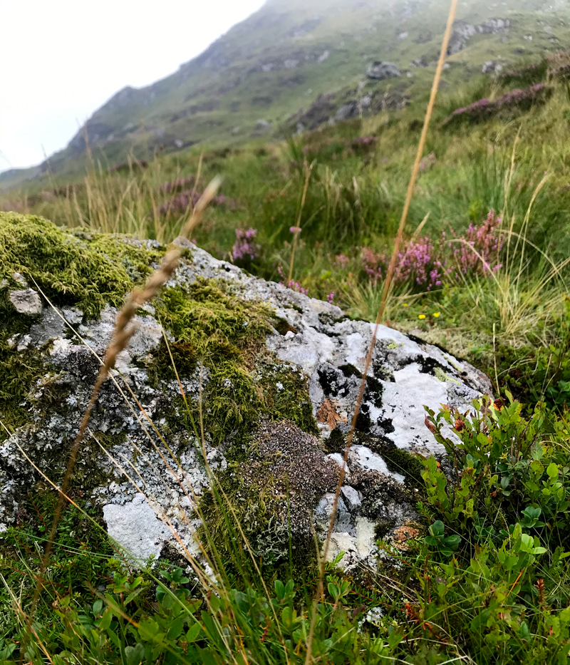 A rock covered with lichen and moss, found on the mountain Cadair Idris in Wales