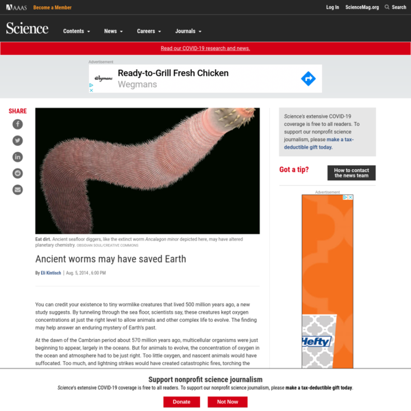 Ancient worms may have saved Earth