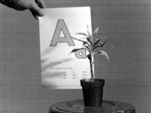 John Baldessari, Teaching a Plant the Alphabet (1972)