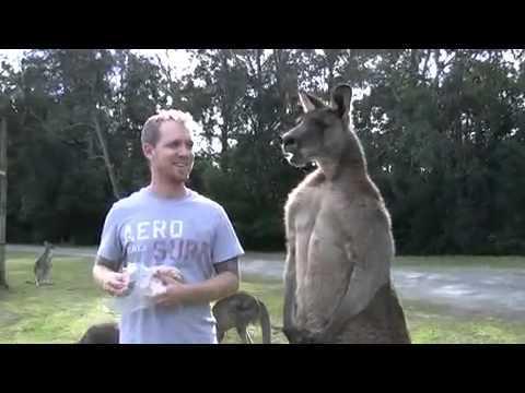 Man Feeds Buff Kangaroo