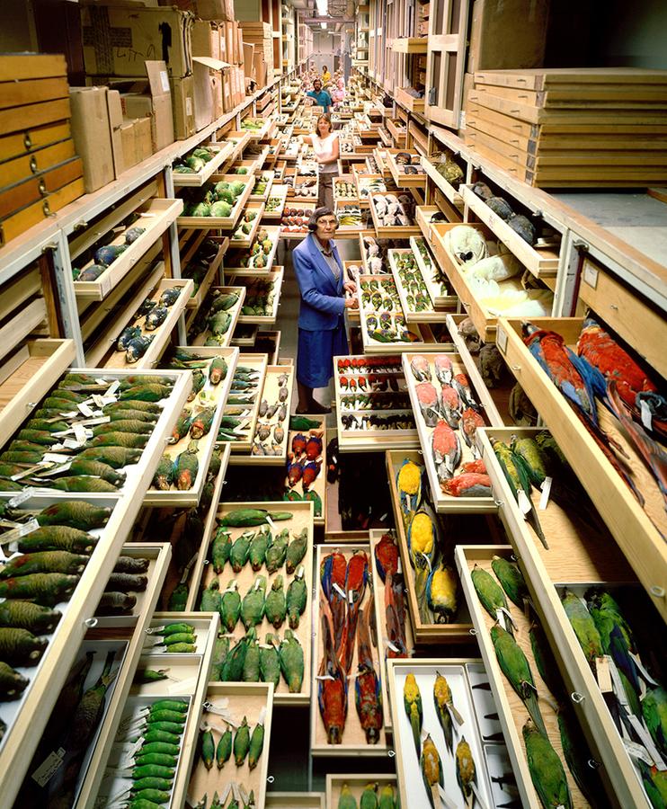 backroom-storage-at-the-smithsonian-natural-history-museum-designboom-01.jpg