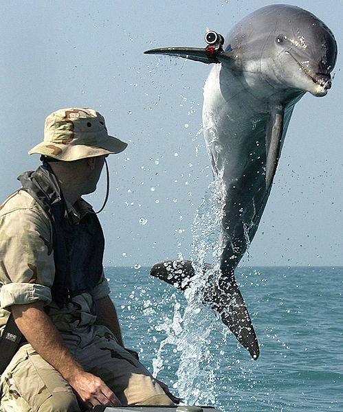 499px-NMMP_dolphin_with_locator.jpeg