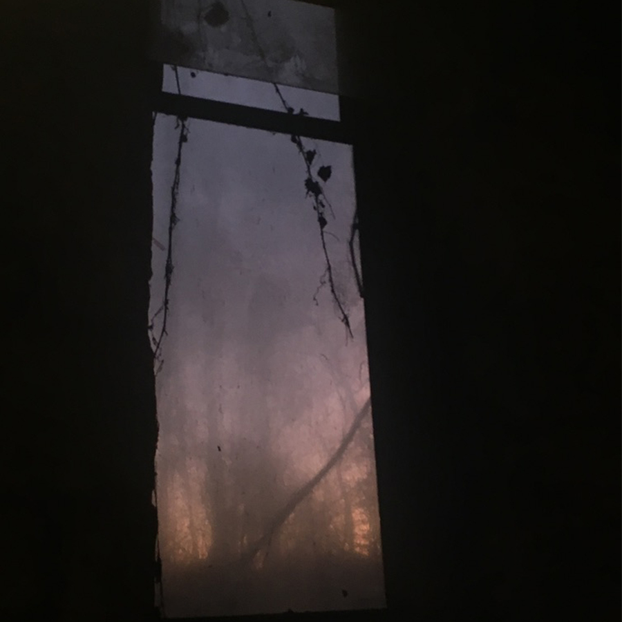 a window viewed from the inside at twilight, the sky is a blurry gradient of orange and purple, the  glass is fogged with vines hanging on theinside