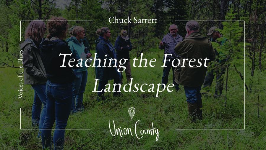 teaching-the-forest-landscape-thumbnail.jpg