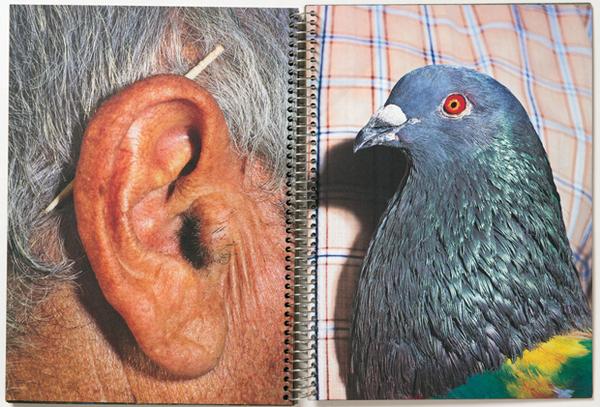 pigeon-opener.jpg