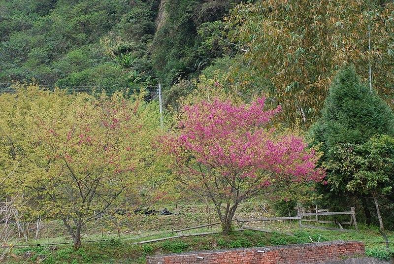 800px-311-_taiwan-_-_-_panoramio_-18-.jpg