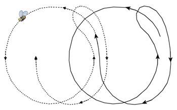 Round-dance1.jpg