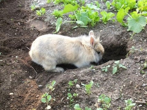 Super Bunny Digging 100 Meters Long Tunnel