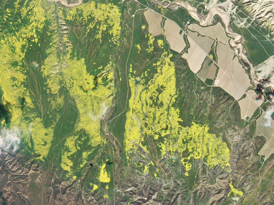 Wildflower bloom in California desert visible from space